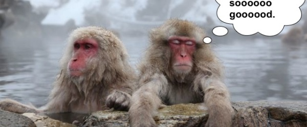 funny bathing monkeys