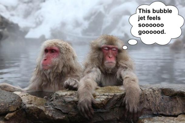 funny bathing monkeys