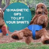 13 Magnetic Gifs That Will Kill Your Crankiness